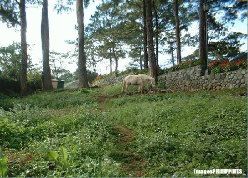 """Dirty White Horse"",  Place Taken: Baguio City take on  Date Taken: December 2003"