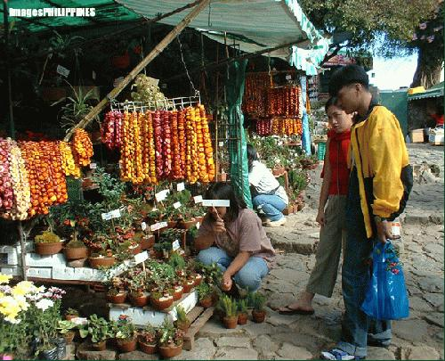 """""""Plants for Fale in MInes View"""",  Place Taken: Baguio City take on  Date Taken: December 2003"""