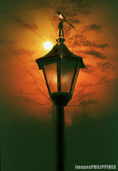 """Bird in a lamp post"" (Composite Image)