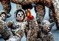 Caracol Tigers, Photographer/Artist: Ferdinand Bernales, Date Taken: 2010, Place Taken: Metro Manila