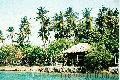 """Punta del Sol"", Photographer/Artist: Antonette Amora, Date Taken: Feb. 14, 2005, Place Taken: Samal Island, Davao"
