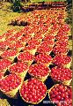 """Tomatoes from Ilocos"", Photographer/Artist: Nestor Santiago, Date Taken: 1992, Place Taken: Ilocos Sur"
