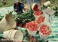 """Rambutan Harvest"", Photographer/Artist: Nestor Santiago, Date Taken: 2002, Place Taken: Lipa City"