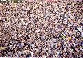 """Sinulog high mass celebration taken at Basilica del , Sto.Nino Cebu City"", Photographer/Artist: Arlene Solis Chua, Date Taken: 2003, Place Taken: Cebu"