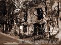 """Branches in time"", Photographer/Artist: Ferdinand Decena, Date Taken: 2005, Place Taken: Fort Bonifacio, Metro Manila"