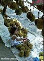 """""""Young Marang Vendor"""", Photographer/Artist: Nestor Santiago, Date Taken: 2002, Place Taken: Davao"""