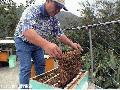 """Man Inspecting Bee Hive"",