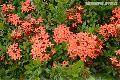 """Santan Flowers"",