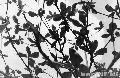 """Leaves"", Photographer/Artist: Ralph Camus, Date Taken: 2003"