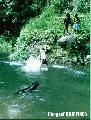 """dive"", Photographer/Artist: Sidney Mi�oza Nanini , Date Taken: 2004, Place Taken: North Cotabato"