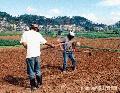 """La Trinidad Valley Gardeners"" , Photographer/Artist: Art Pang-ot Tibaldo , Date Taken: 2002, Place Taken: Benguet"