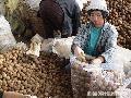 """Packing of Benguet Grown Potatoes"" , Photographer/Artist: Art Pang-ot Tibaldo, Date Taken: 2004, Place Taken: La Trinidad, Benguet"