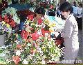 """Flowers of Baguio"", Photographer/Artist: Art Pang-ot Tibaldo, Date Taken: 2004, Place Taken: Baguio City"