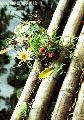 """Escargo"", Photographer/Artist: Nestor Santiago , Date Taken: 2001, Place Taken: Tiaong, Quezn"