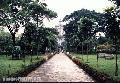 """""""UST Walkway"""", Photographer/Artist: Joel Abelida, Date Taken: 2002, Place Taken: Metro Manila"""