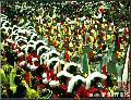 """Boy Marching Band, Quiapo Fiesta"", Photographer/Artist: Nestor Santiago, Date Taken: 1998, Place Taken: Metro Manila"