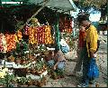 """Plants for Fale in MInes View"",