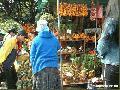"""""""Plants in MInes View"""", Photographer/Artist: Christiane L. De La Paz , Date Taken: December 2003, Place Taken: Baguio City"""